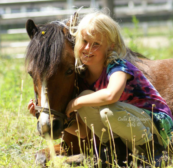 Browse Ads – Welsh Pony & Cob Society of America